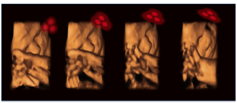 Developing fetuses react to face-like shapes from the womb