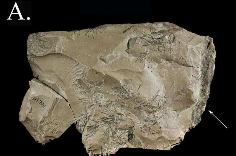 Discovery adds rock collecting to Neanderthal's repertoire
