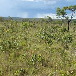 Expanding tropical forest spells disaster for conservation