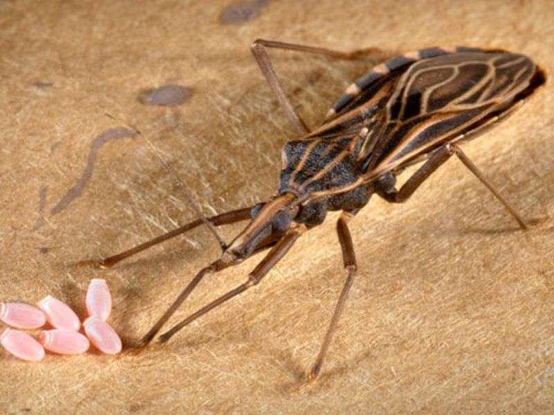 FDA approves pediatric treatment for chagas disease