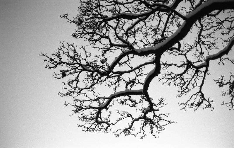 Fractal patterns in nature and art are aesthetically pleasing and stress-reducing