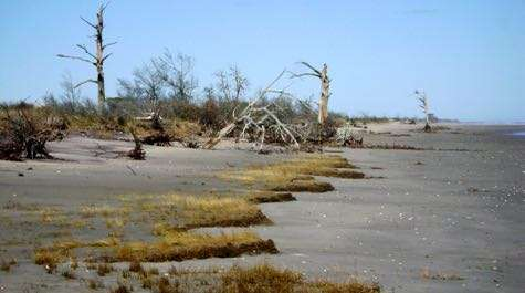 Holistic study of coastal ecosystem reveals rapid response to climate change