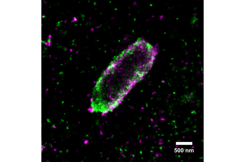 How cells combat Salmonella