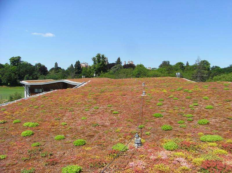 Improving the biodiversity of green roofs