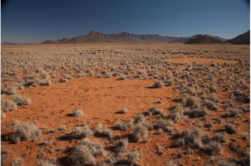 In African 'fairy circles,' a template for nature's many patterns
