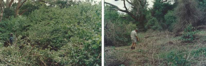 Invasive alien plant control assessed for the Kruger National Park in South Africa