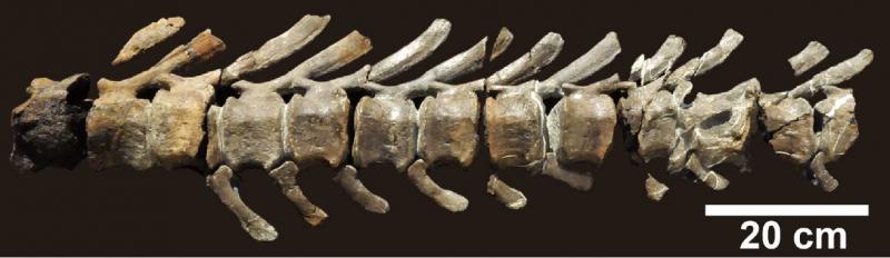 Japan's largest complete dinosaur skeleton discovered