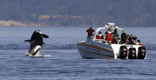 Killer whales could have quiet space off Washington coast