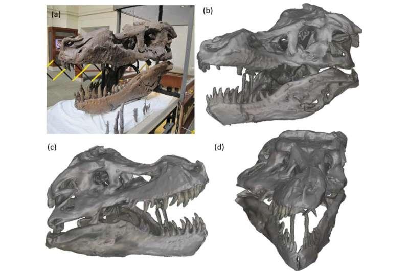 Kinect scan of T. rex skull addresses paleontological mystery