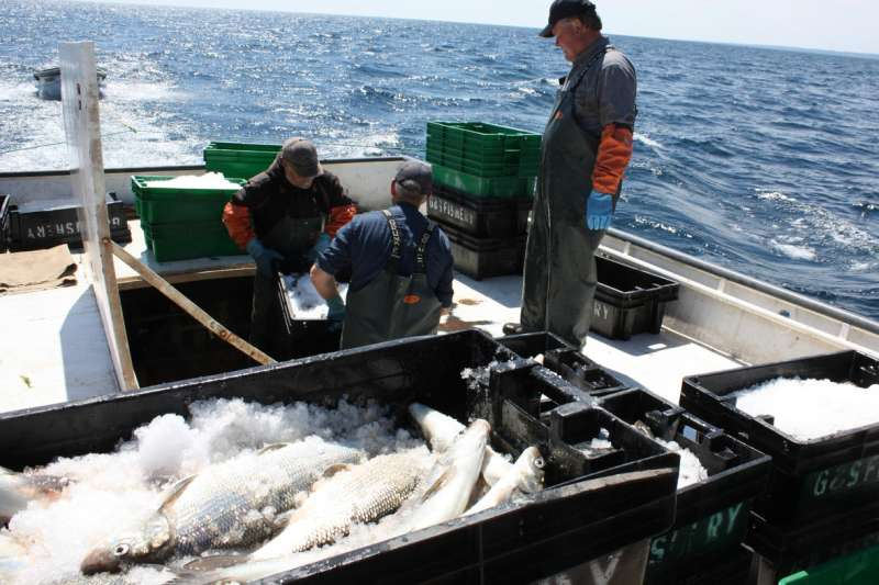 Lake harvests are likely more fruitful than we knew