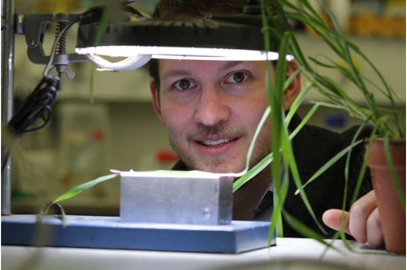 Light green plants save nitrogen without sacrificing photosynthetic efficiency