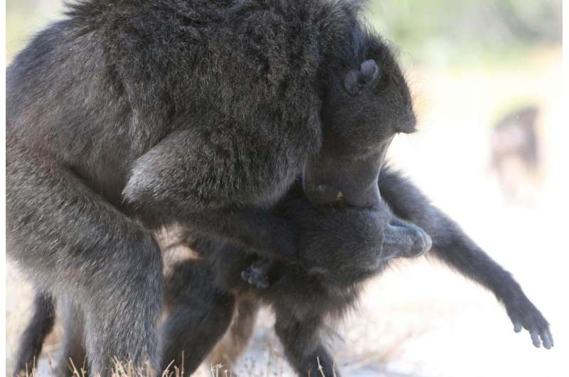 Long-term sexual intimidation may be widespread in primate societies