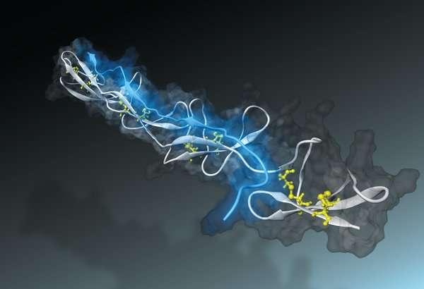 Nano-sensor measures tension of tissue fibres