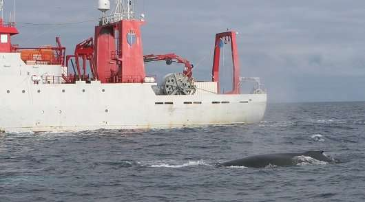 Navy efforts to protect whales have limited effect