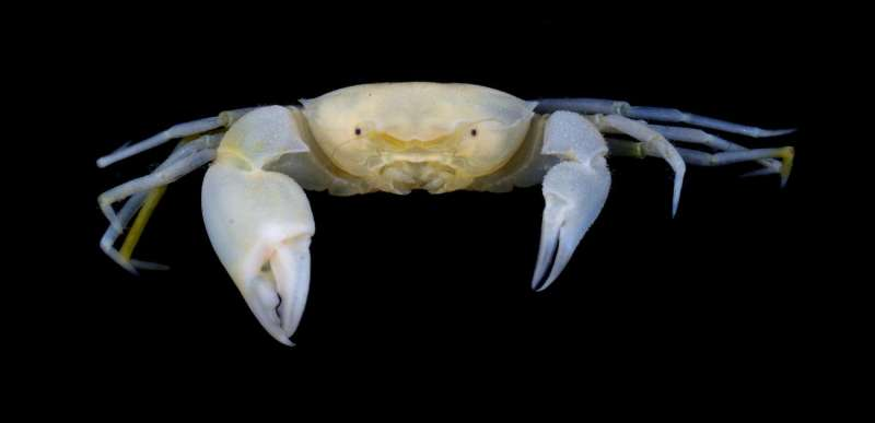 New crab species shares name with 2 'Harry Potter' characters and a hero researcher