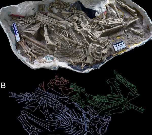 New dinosaur discovery suggests new species roosted together like modern birds