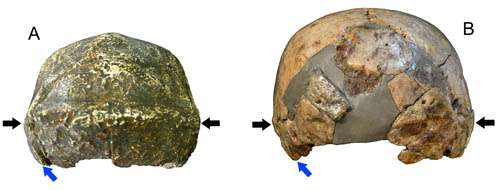 New finds from China suggest human evolution probably of regional continuity