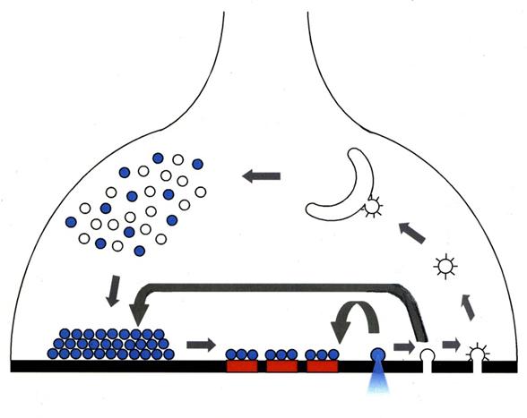 New mechanism behind Parkinson's disease revealed