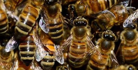 New research debunks honey bee pesticide study
