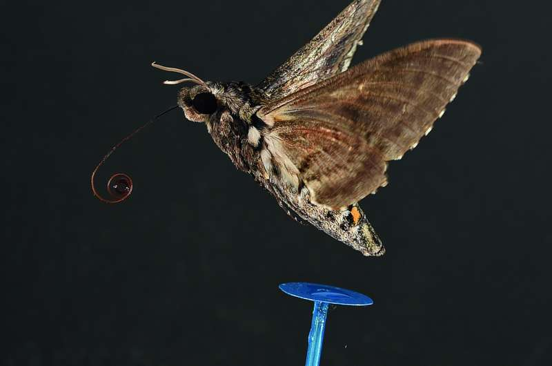 New study changes view on flying insects