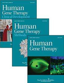New system for therapeutic gene delivery increases transgene expression up to 100-fold