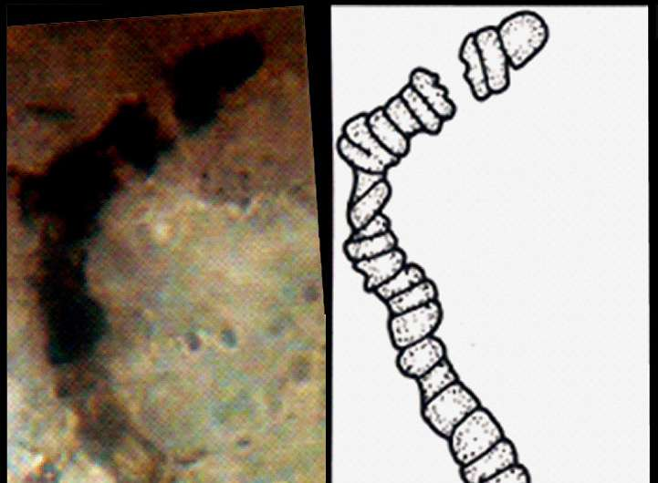 Oldest fossils ever found show life on Earth began before 3.5 billion years ago