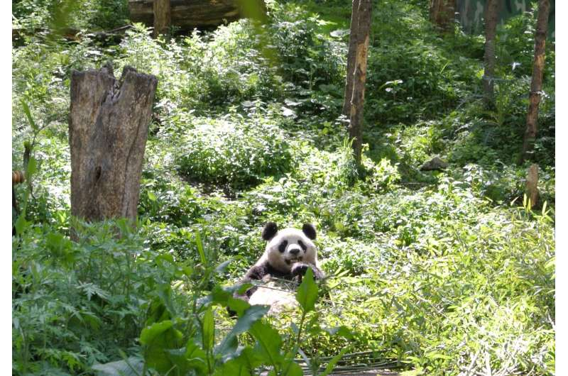 Panda love spreads to benefit the planet