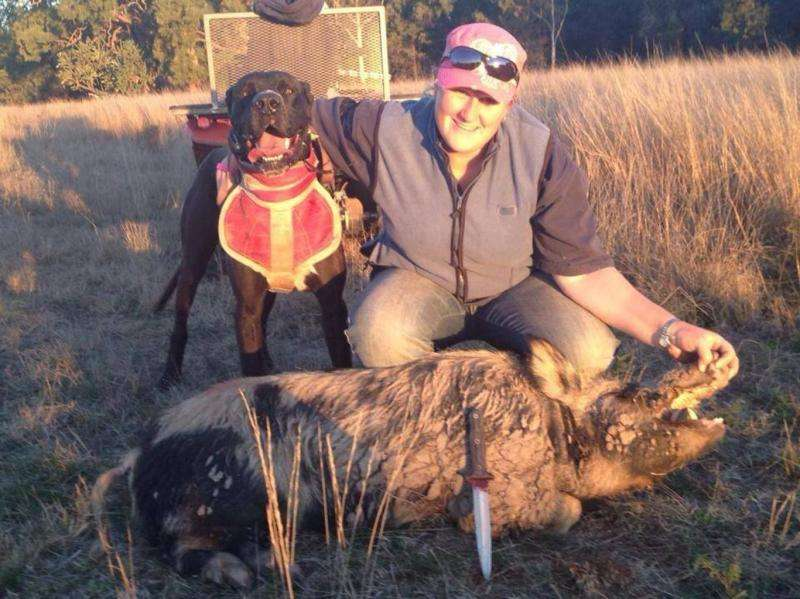 Pig-hunting dogs and humans are at risk of a disease that can cause miscarriages and infertility