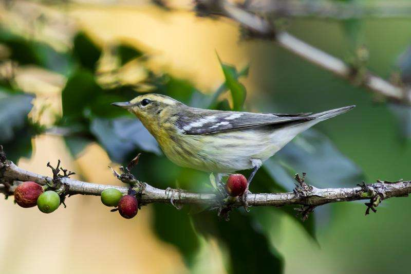 Radical collaboration protects Colombia's birds, coffee farmers