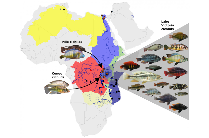 Researchers solve fish evolution mystery