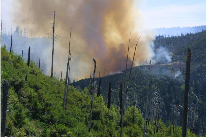 Scientists examine impact of high-severity fires on conifer forests