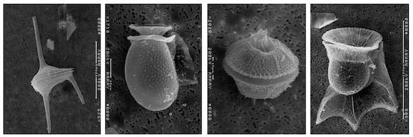 Scientists map the genetic evolution of dinoflagellates for the first time
