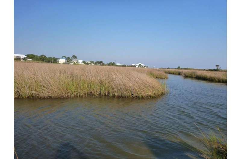 Sequestering blue carbon through better management of coastal ecosystems