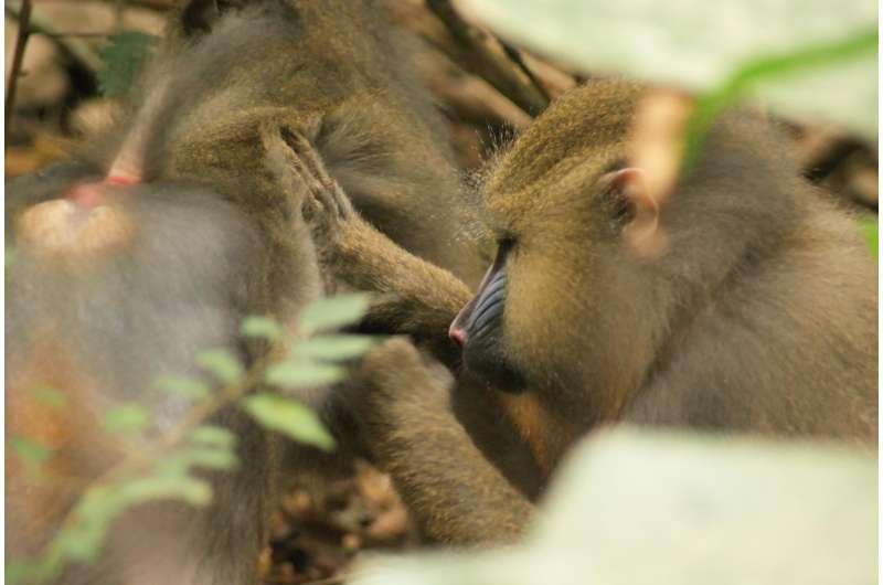 Smell helps primates flee parasites