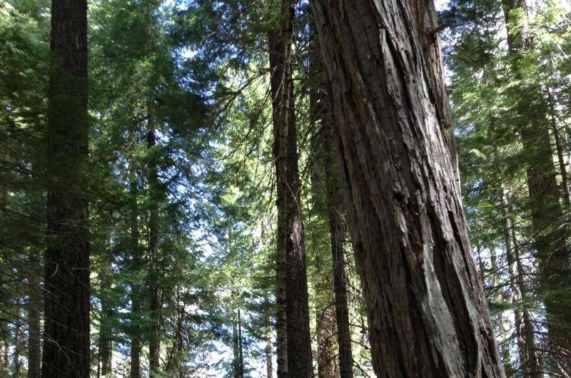 Study refutes findings behind challenge to Sierra Nevada forest restoration