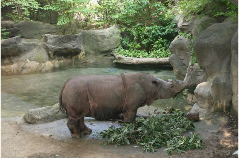 Sumatran rhinos never recovered from losses during the Pleistocene, genome evidence shows