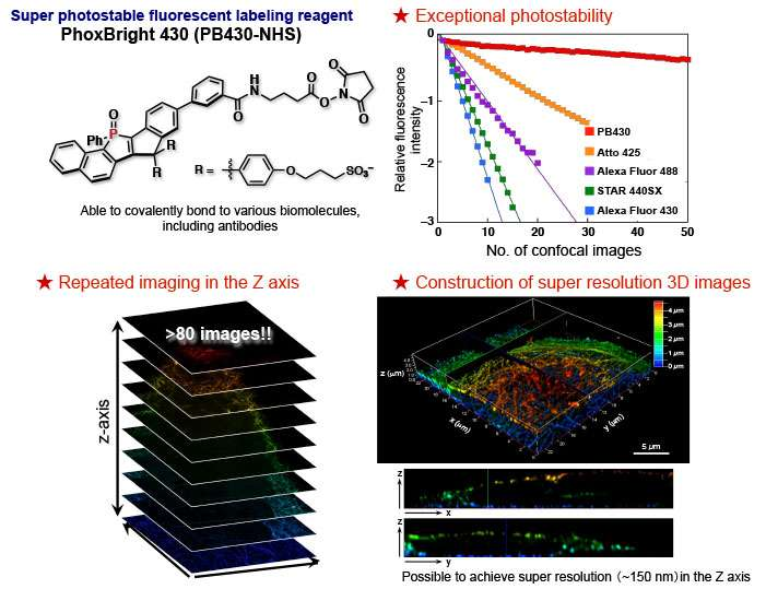 Super-photostable fluorescent labeling agent for super-resolution microscopy