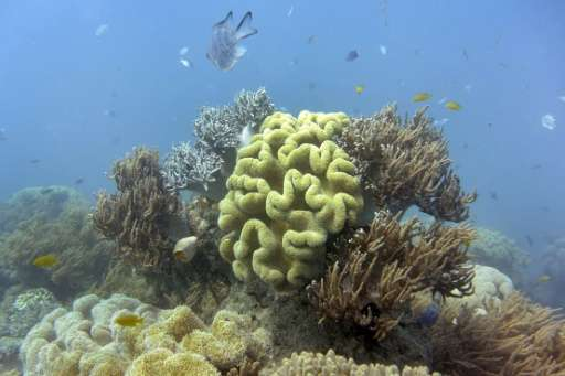 The 2,300-kilometre (1,400-mile) World Heritage-listed Great Barrier Reef suffered its most severe bleaching on record last year