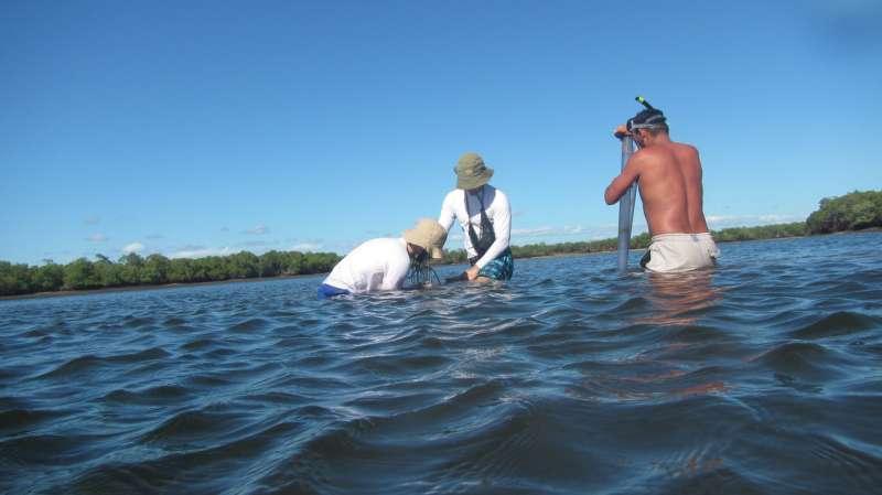 The fingerprints of coastal carbon sinks