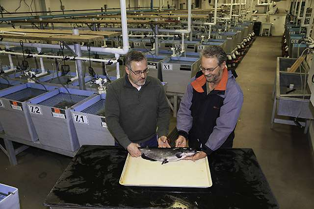 The first sequencing of a channel catfish genome