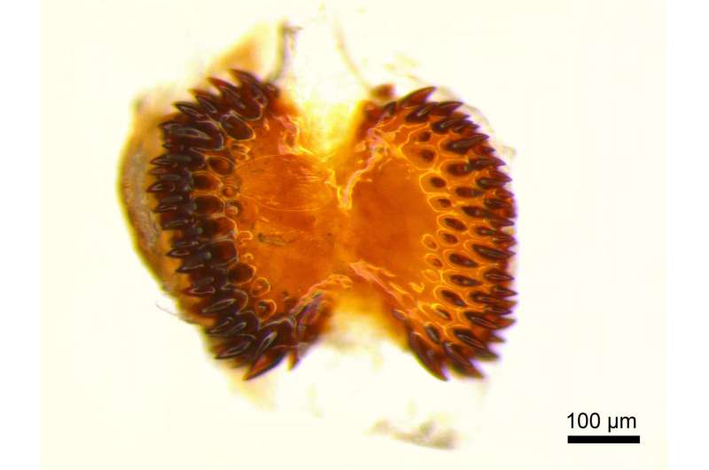 UC biologist looks at butterflies to help solve human infertility