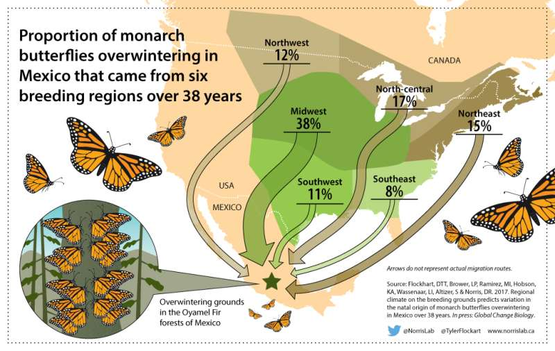 University of Guelph researchers identify monarch butterfly birthplaces to help conserve species