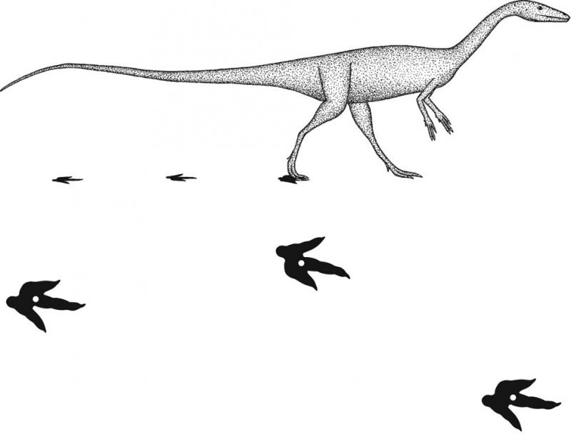 Using step width to compare locomotor biomechanics between dinosaurs and modern bipeds