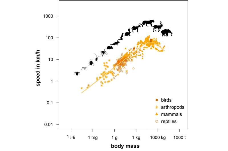 Why Tyrannosaurus was a slow runner