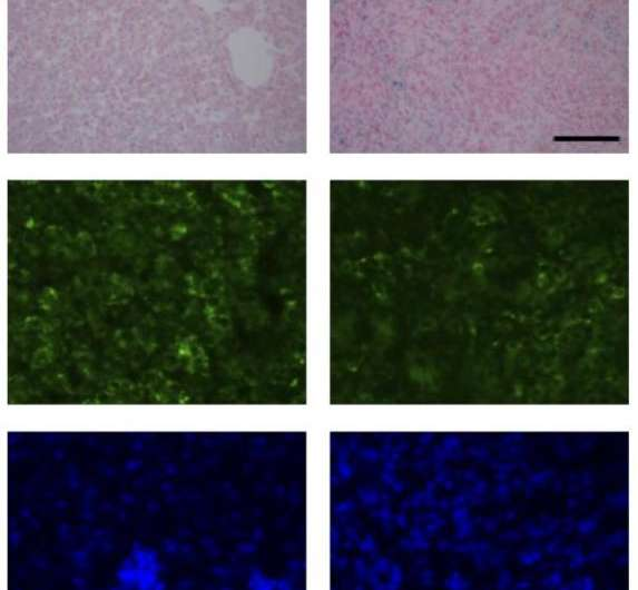 New insights into the regulation of cellular iron