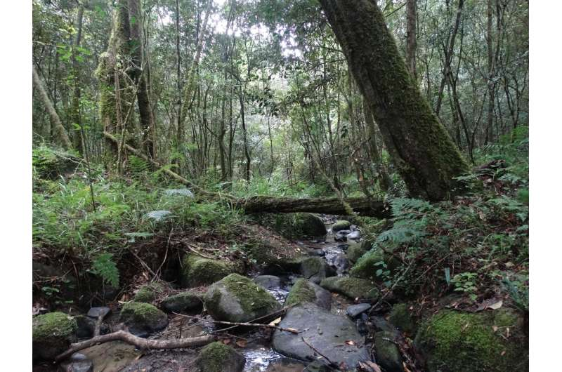 Researchers investigate decline in South Africa's forest-birds