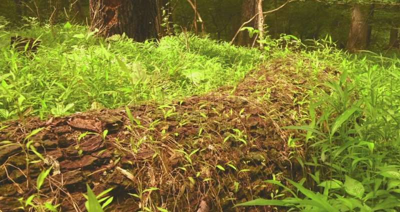 Research shows the impact of invasive plants can linger long after eradication