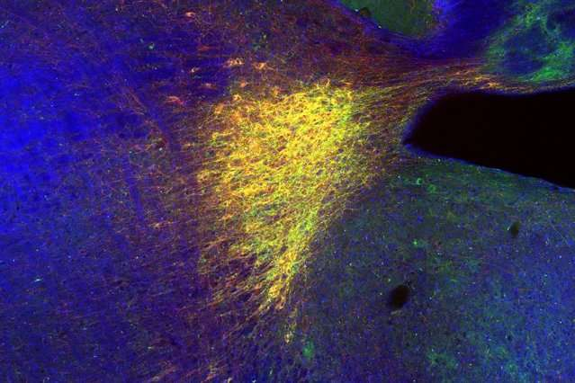 Neuroscientists identify a circuit that helps the brain record memories of new locations