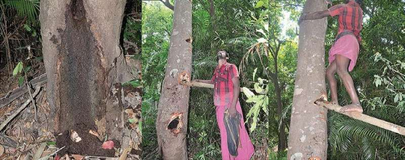 New species of tree living crab found in Western Ghats
