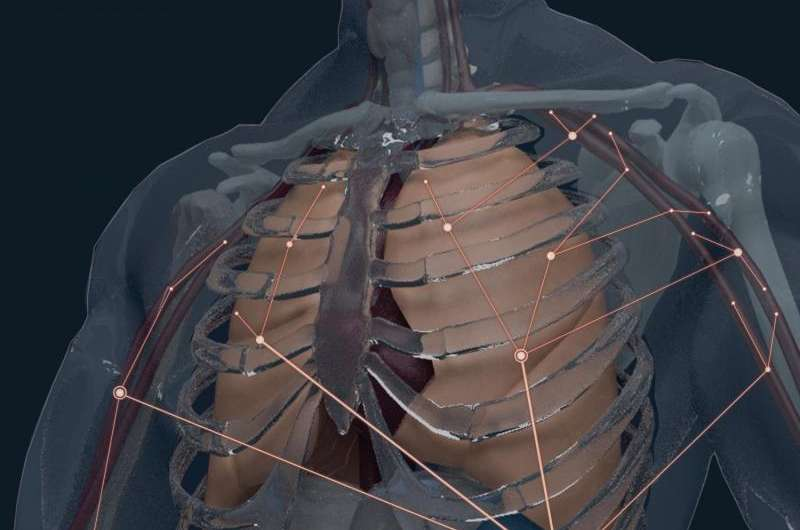 Scientists create atlas of specialized defense cells in the human body
